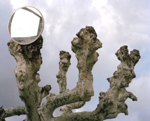 Mirrortree-jaap-610x493