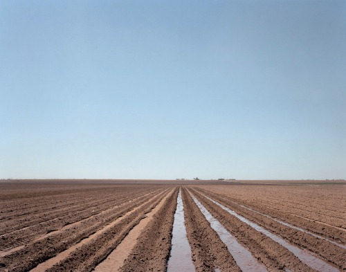 Irrigated-field