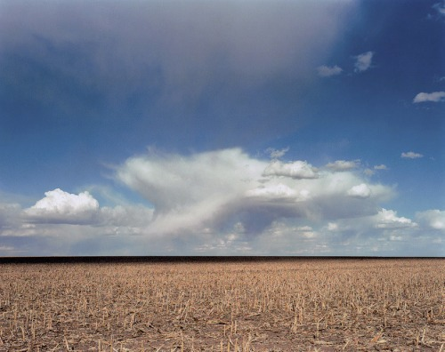 Wheat-and-cloud