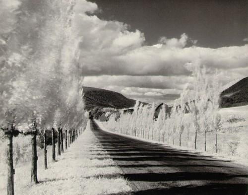 Minor_white-road_and_poplar_trees_1955