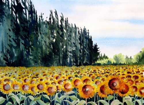 Hollyfriesenwatercolourofasunflowerfield